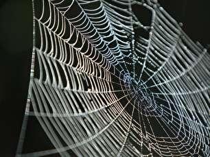 چرا مردم از عنکبوت ها می ترسند؟