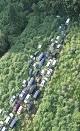 فوکوشیما؛ خودروهایی که توسط طبیعت بلعیده می شوند! (+تصاویر)