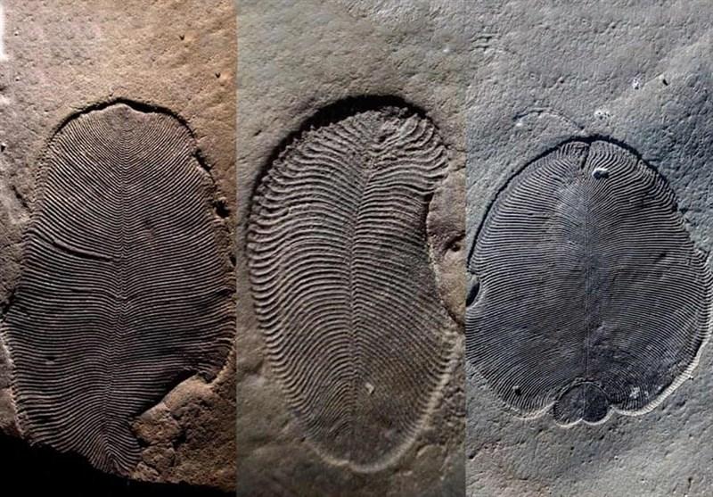 کشف قدیمیترین جانور جهان متعلق به 558 میلیون سال پیش