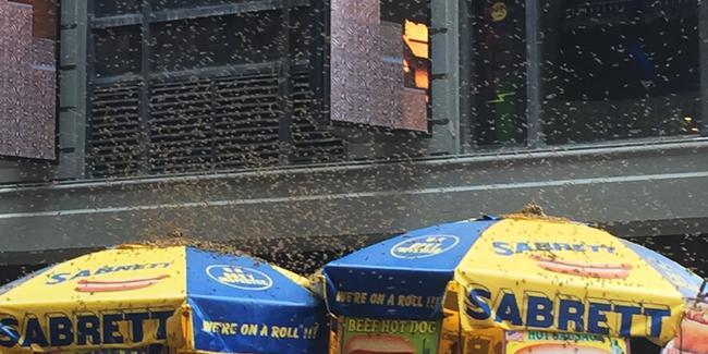 حمله زنبورها به میدان تایمز نیویورک (+عکس)