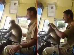 رانندگی میمون با اتوبوس سر و صدا بپا کرد! (+عکس)