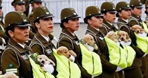 عکس جالب از رژه سگ های پلیس
