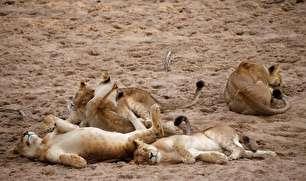 تصاویر دیدنی از حیات وحش تانزانیا