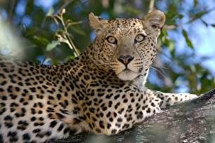 جانوران در حال انقراض؛ شاید فردا دیگر نباشند! (+عکس)