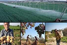 حجتی: نرخ تضمینی محصولات کشاورزی افزایش مییابد