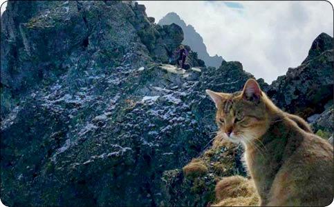گربه خانگی کوه نورد! (+عکس)