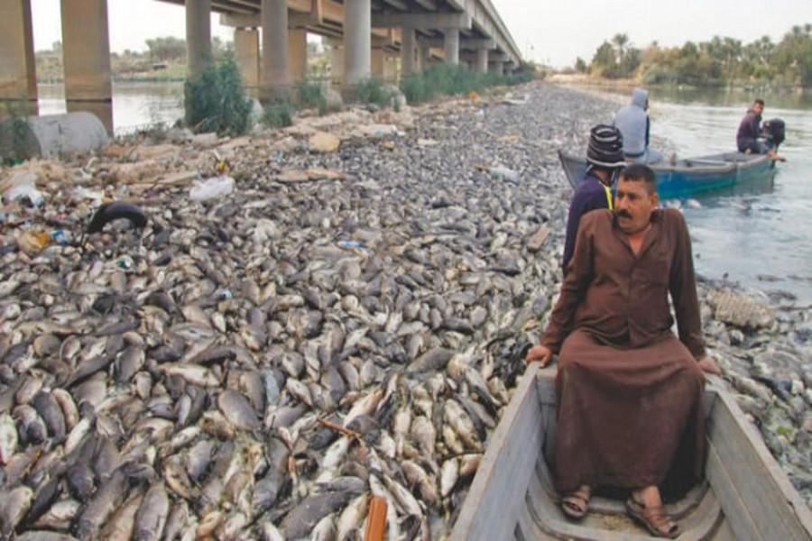 مرگ هزاران ماهی کپور در دجله و فرات (+عکس)