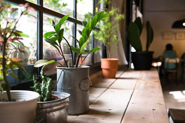 از فواید سلامت نگهداری گیاهان در خانه