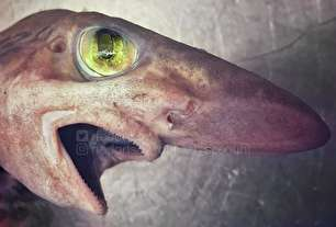 تصاویر هراسانگیز از موجودات اعماق دریاها