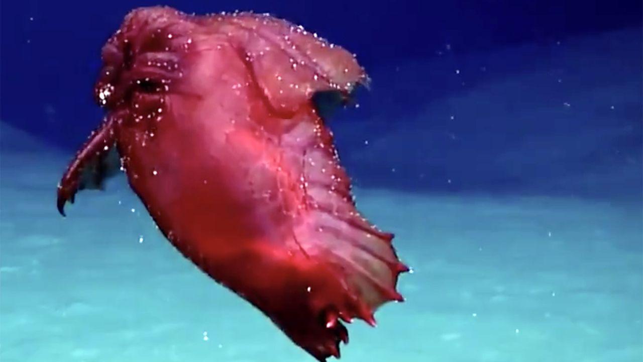 هیولای مرغ بیسر در اعماق اقیانوس جنوبی (+عکس)