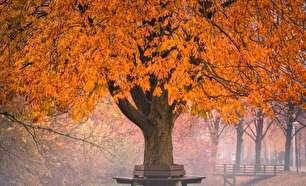 جلوههایی زیبا از درخشش آفتاب پاییزی (عکس)