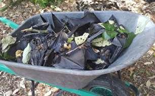 مرگ خفاشها در استرالیا (+عکس)