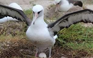 پرنده 68 ساله دوباره مادر میشود (+عکس)