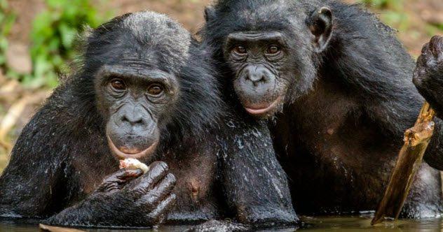 نمونههایی از هدیه دادن در دنیای حیوانات (+عکس)