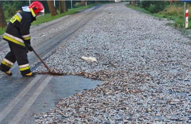 عجیبترین چیزهایی که در جادهها پخش و پلا میشوند