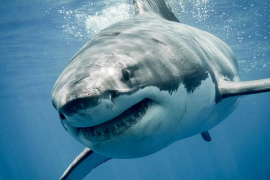 9 جانوری که آن قدرها هم که فکر میکردید خطرناک و مرگبار نیستند (+عکس)