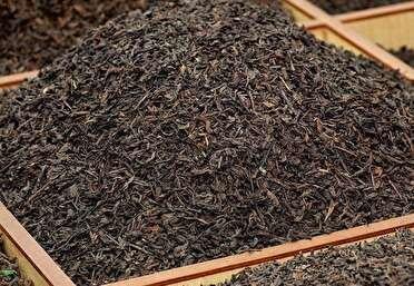 کشف بیش از یک تن چای فاسد در املش گیلان