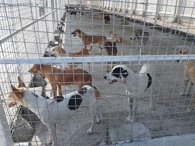 فعالیت تیمهای ویژه کنترل سگهای بلاصاحب در کرج