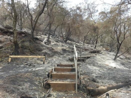 گردشگر استرالیا آتش سوزی
