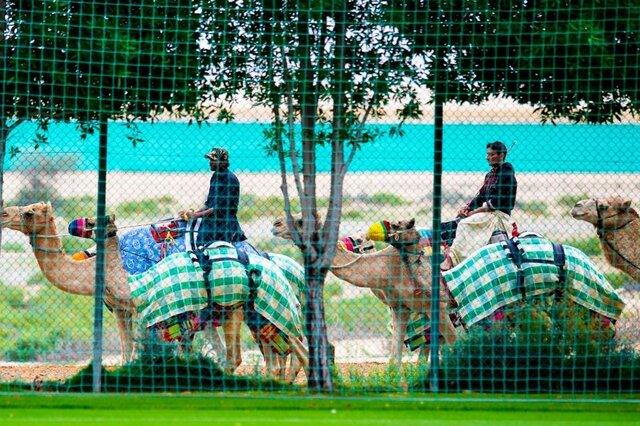 شترهای فوتبالدوست
