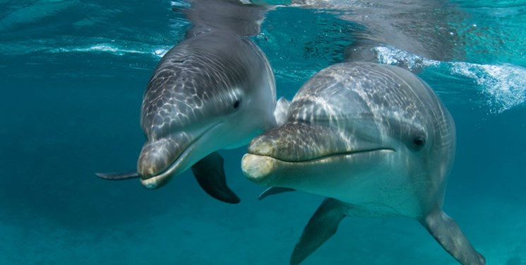 گزارش شهرداری از دلفیناریوم برج میلاد و بررسی مرگ یک دلفین