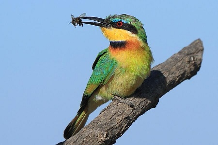 قتل عام ۵۰۰ پرنده بهخاطر یک مشت عسل در قم