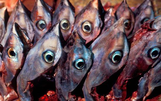 چشمهای ماهی تن، ژاپن