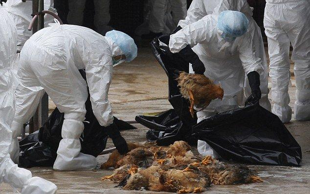 شیوع آنفلوآنزای پرندگان در بحبوحه همهگیری کروناویروس در چین