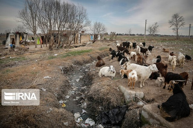 روایت خواهر و برادری که در «قوچ حصار» طعمه سگها شدند
