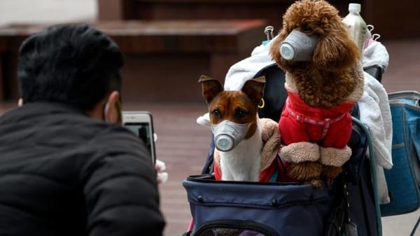 ابتلای یک سگ در هنگ کنگ به نوعی خفیف از ویروس «کرونا»