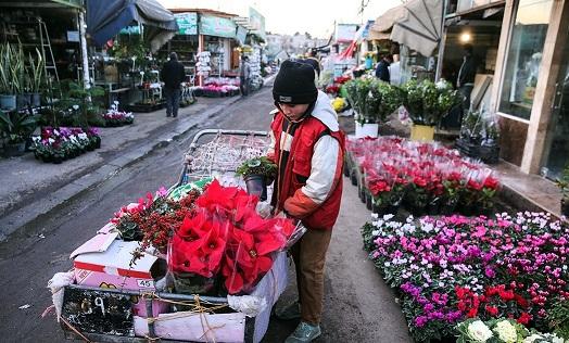 آتش «کرونا» به جان بازار گل تهران/ گرسنگی تا اطلاع ثانوی!