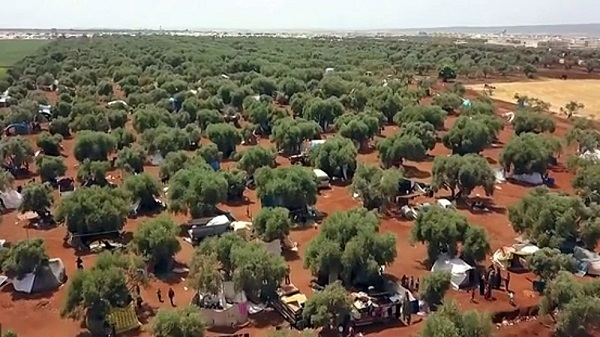 خانواده های ادلب زیر سایه درختان زیتون