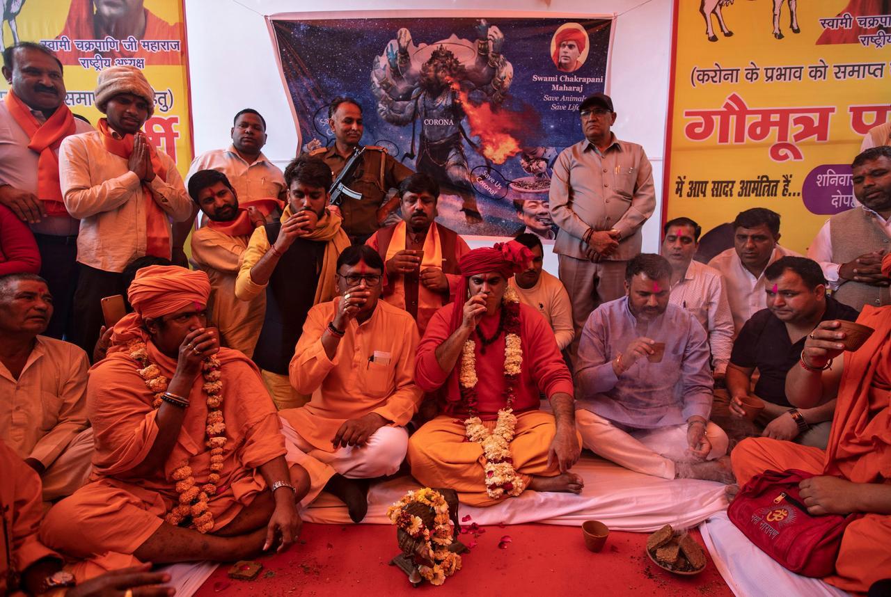 نوشیدن ادرار گاو؛ راهکارها برخی از هندوها برای جلوگیری از ابتلا به کرونا (+عکس)