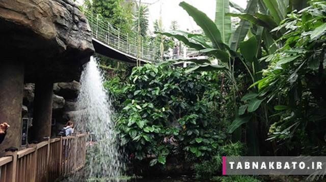 باغ گیاه شناسی یومیجی