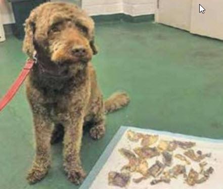 سگی که اسکناس میخورد