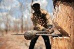 زندگی در ایران به خطر افتاده / با قطع درختان، خودمان را به سوی نابودی میبریم (+فیلم)
