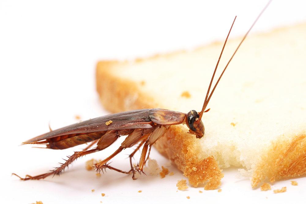 چگونه با حشرات خانگی کنار بیاییم؟