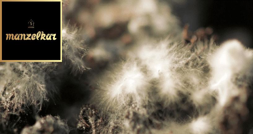 پرورش قارچ مدرن