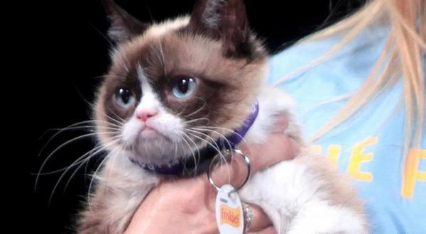 گربه مولتی میلیونر اینستاگرامی مرد (+عکس)