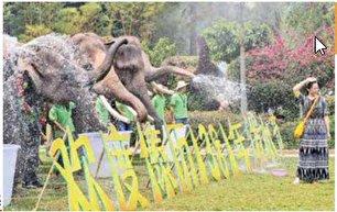 جشنواره آب بازی با فیلها