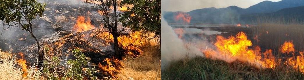 خطری که تهدیدمان می کند: آتش سوزی های تابستانی بعد از سیلاب های بهاری