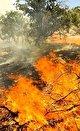 خطر بعدی: آتش سوزی های تابستانی بعد از سیلاب های بهاری