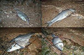 احتمال فروش ماهیهای مسموم در بازار چابهار/ مردم در خرید دقت کنند