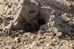 بهار ایران با ارتش میلیونی مورچههای سرخ و پروانههای رنگینبانو (+فیلم)