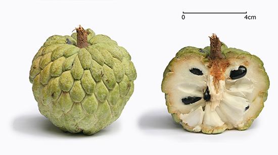 میوههای عجیب و هیجان انگیز آسیا! (+عکس)