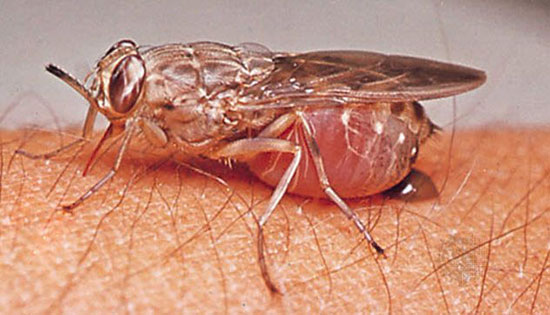 ترسناکترین و خطرناکترین حشرات جهان را بشناسید (+عکس)