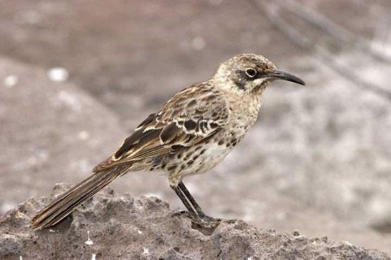 پرندگانی با ظاهری عجیب و خندهدار! (+عکس)
