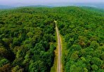 ثبت جهانی، بهبودی بر زخمهای جنگلهای شمال ایران است؟ (+فیلم)
