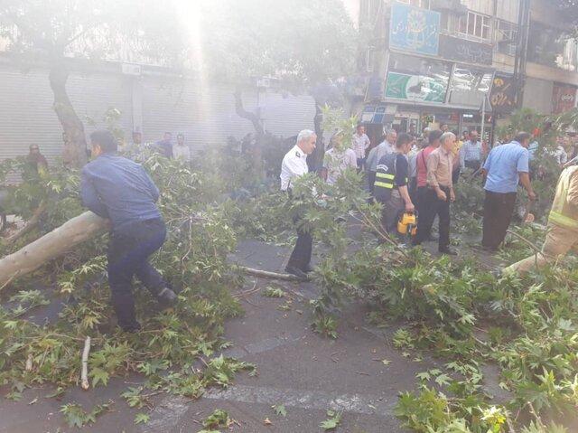 سقوط درخت در خیابان شریعتی تهران (+عکس)