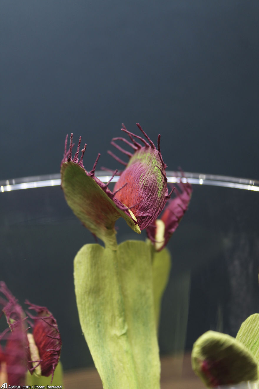 حشرات متفاوت اما شگفت انگیز! (+تصاویر)